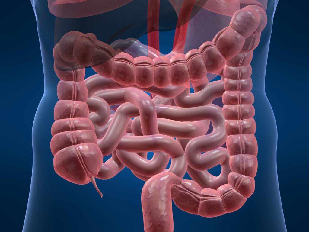 Zeven tips voor gezonde darmen.