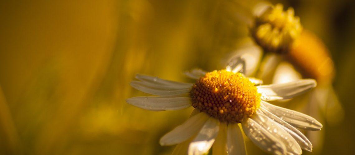 flower-947638_960_720